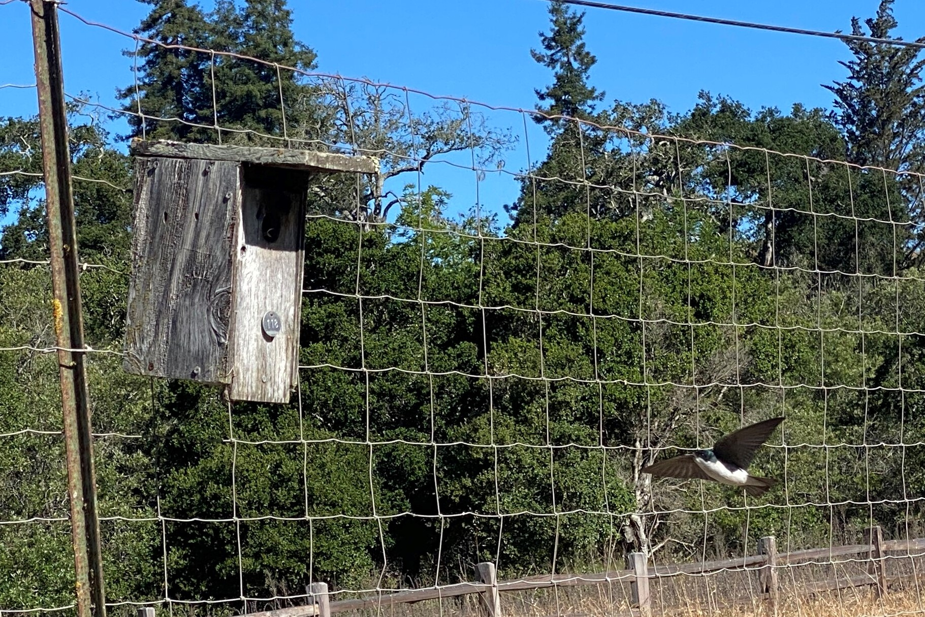 A small colorful bird flies its way to a bird box.
