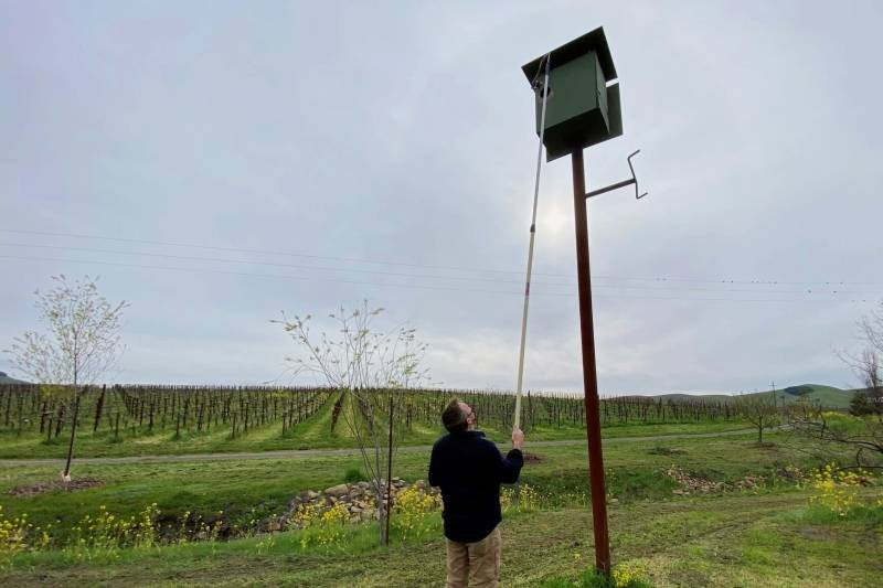 A person holds a painter's pole and GoPro camera connected to his phone to check for nests and eggs in a barn owl box. Behind this person, there are files covered in vineyards.