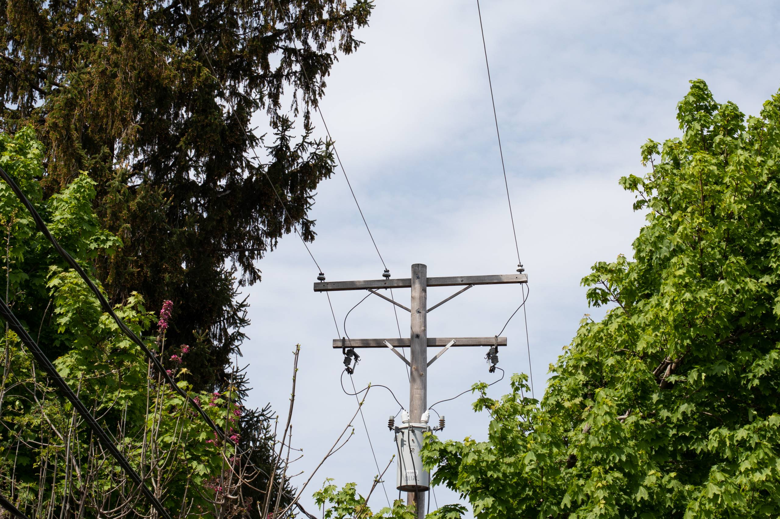 The top of a utility pole and power lines, with trees trimmed back from around them.