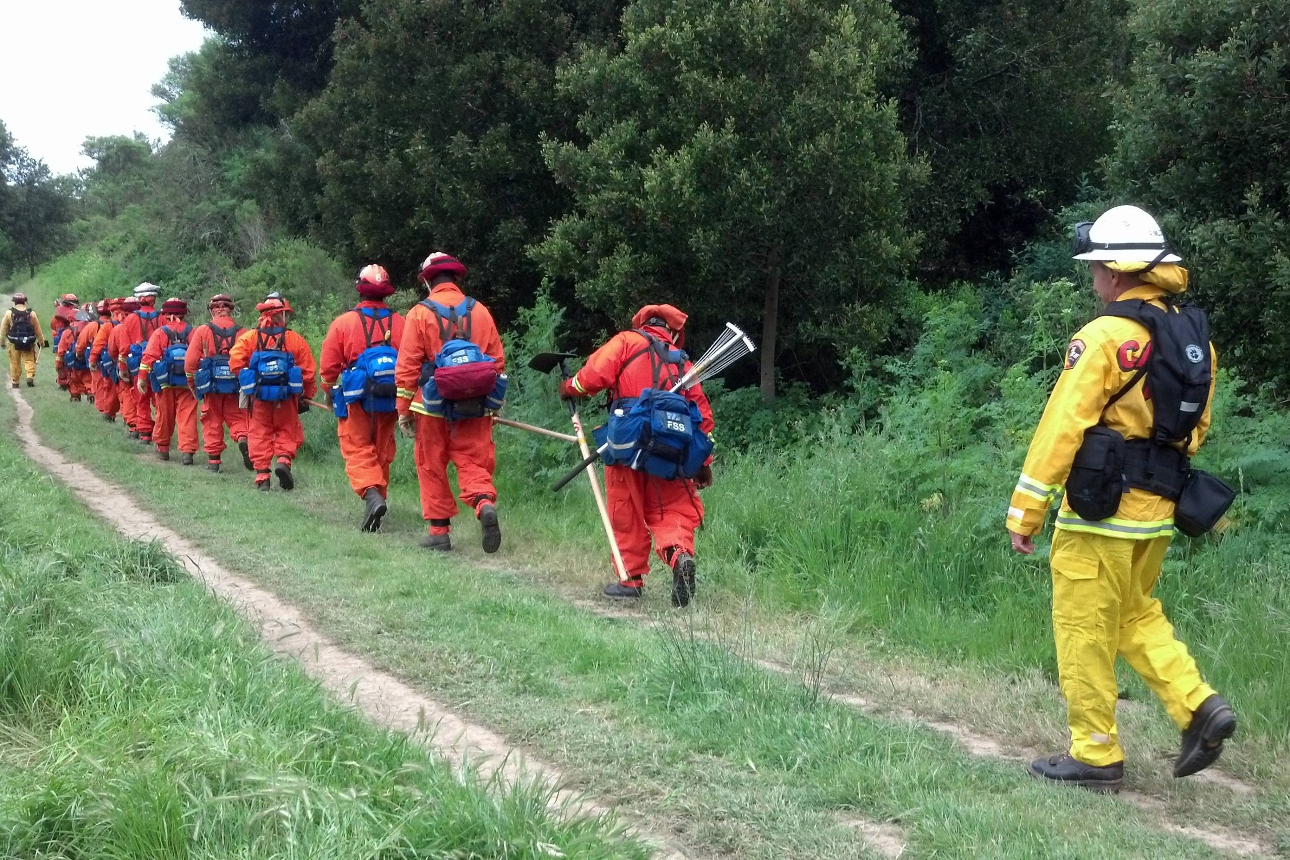 A line of firefighters wearing bright orange uniforms and carrying equipment walk alongside a forest in front of a firefighter wearing a traditional yellow uniform.