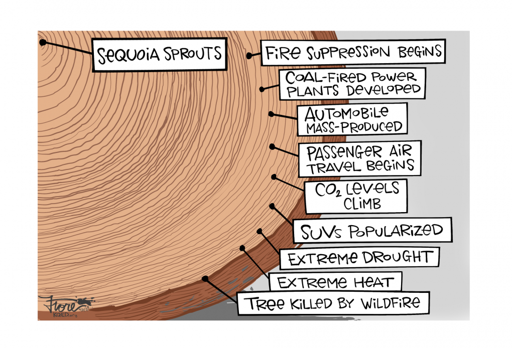 Cartoon: The rings in a cross-section of a giant sequoia labeled to show when the tree sprouted to when fire suppression began on to when the tree died in a wildfire.