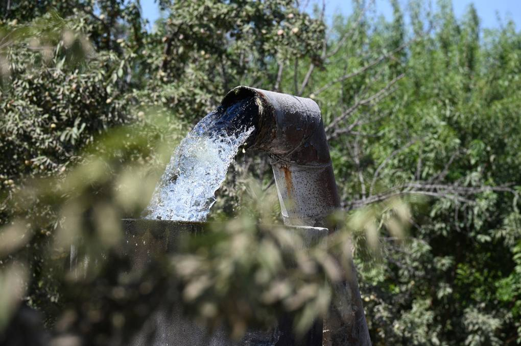 A metal cistern pumps a strong flow of water into a field full of green crops on a sunny day.