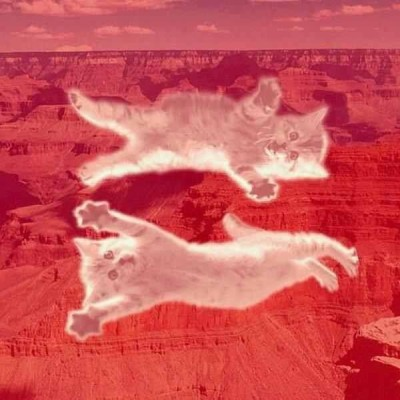 Canyon Kitties