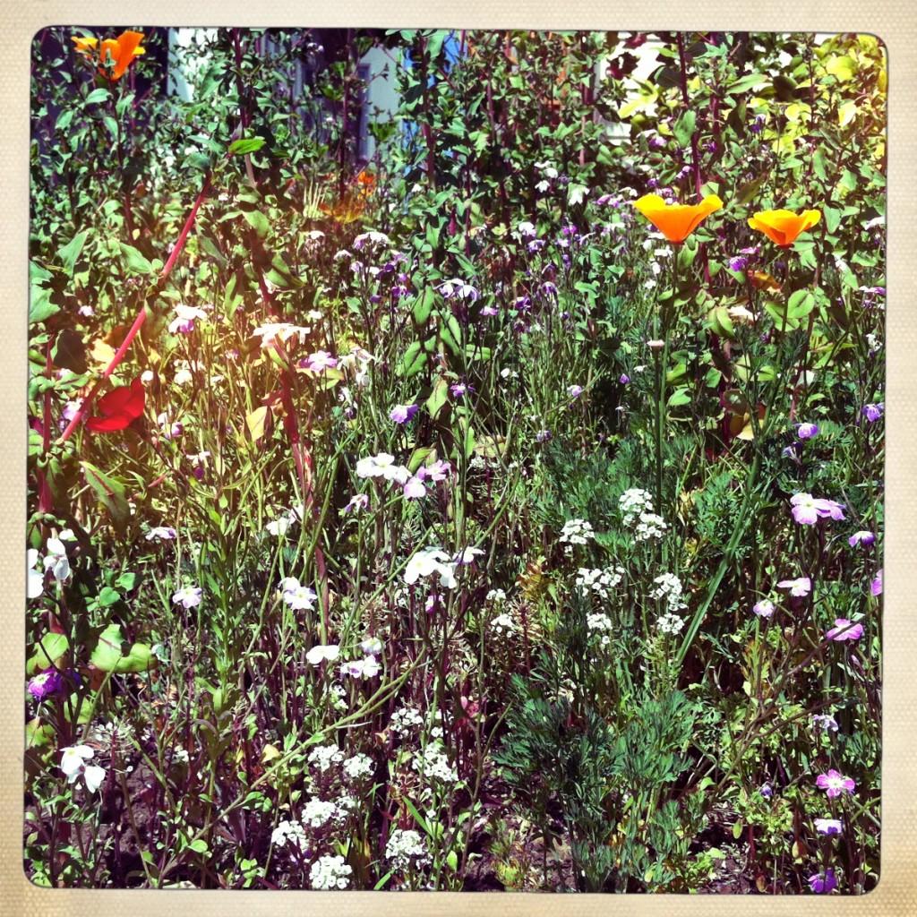 spring:flowers