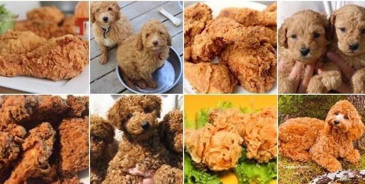 meme of the week canine or cuisine kqed pop kqed arts
