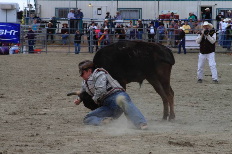 Teenie in a chute dogging event. Traditionally women are not able to compete in steer/ bull events.