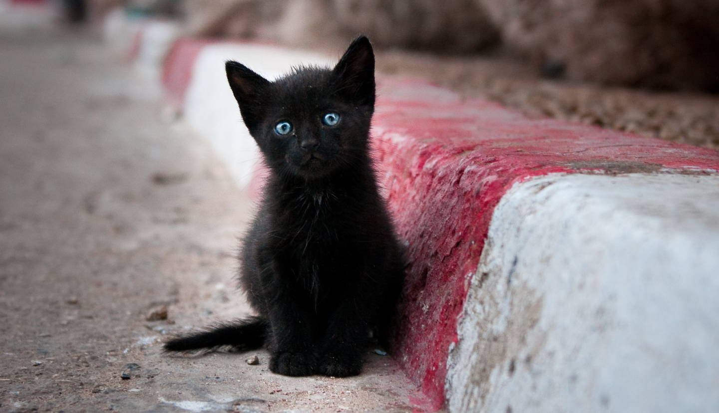 Here's Why We Think Black Cats Are Bad Luck
