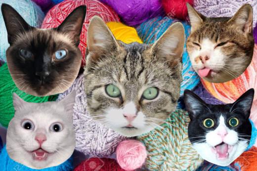 Celebrating International Cat Day Via The Medium Of Hip Hop Kqed