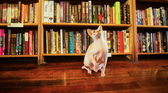 Meet 9 Bookstore Cats From Around the Bay Area