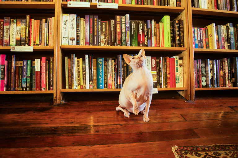 Meet 9 Bookstore Cats From Around the Bay Area by Ashley Urdang for KQED Arts