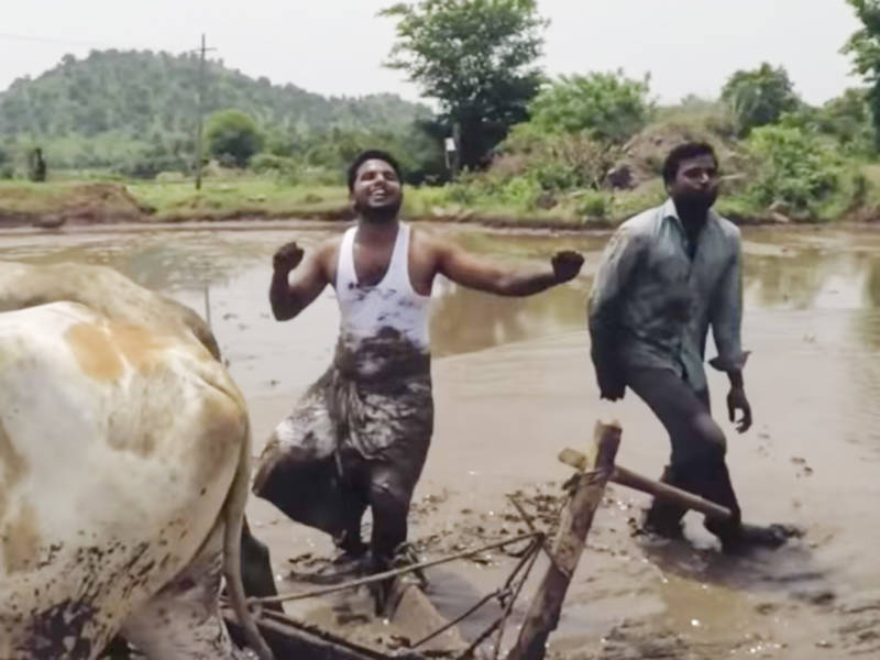 Indian Farmers (Plus Oxen) Just Won the 'Kiki Challenge'