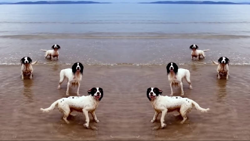 Here's a Video of Tilda Swinton's Spaniels Bouncing Around to Opera