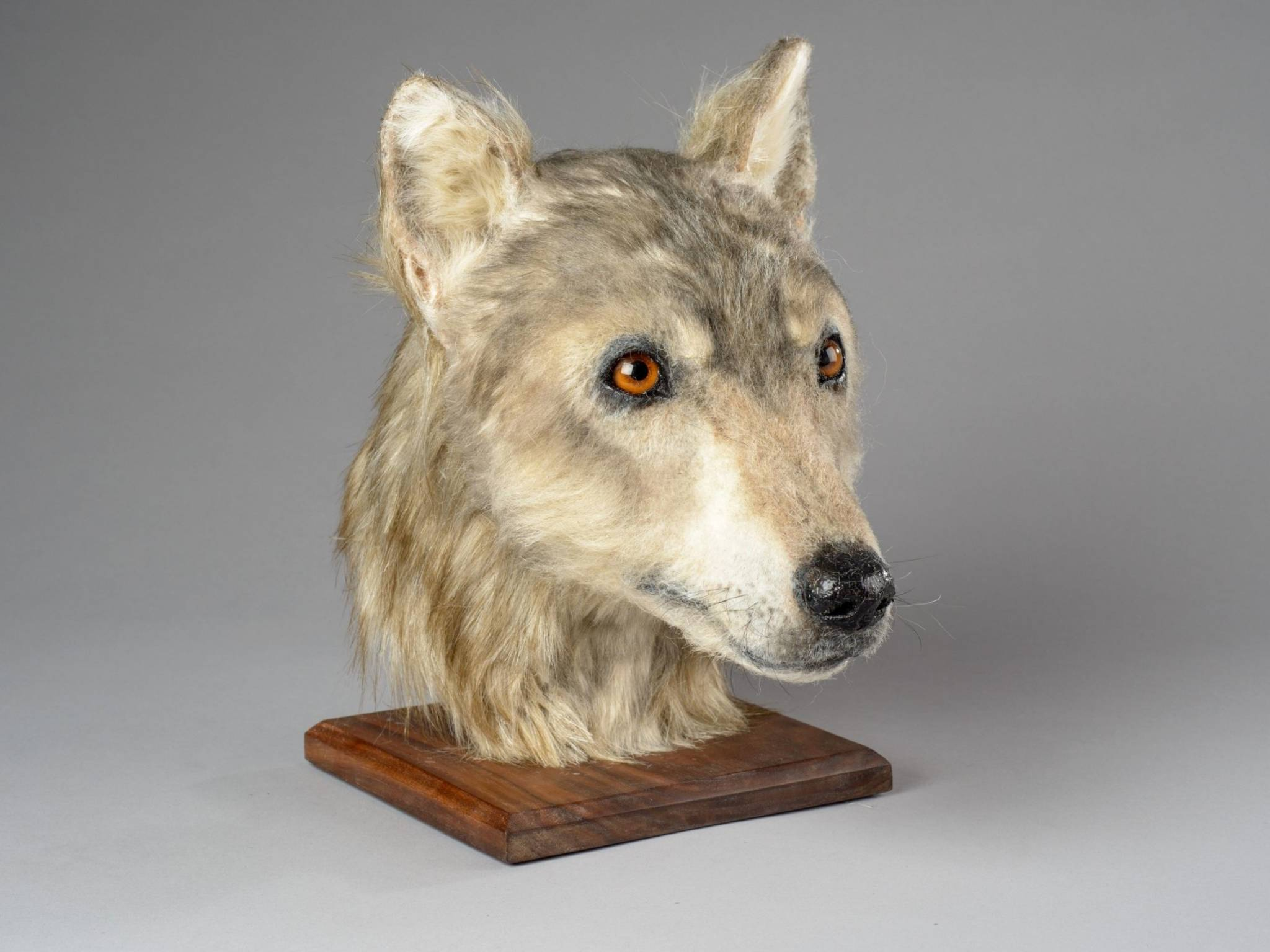A Short History of Dogs (In Honor Of This 4,500 Year Old Cutie)