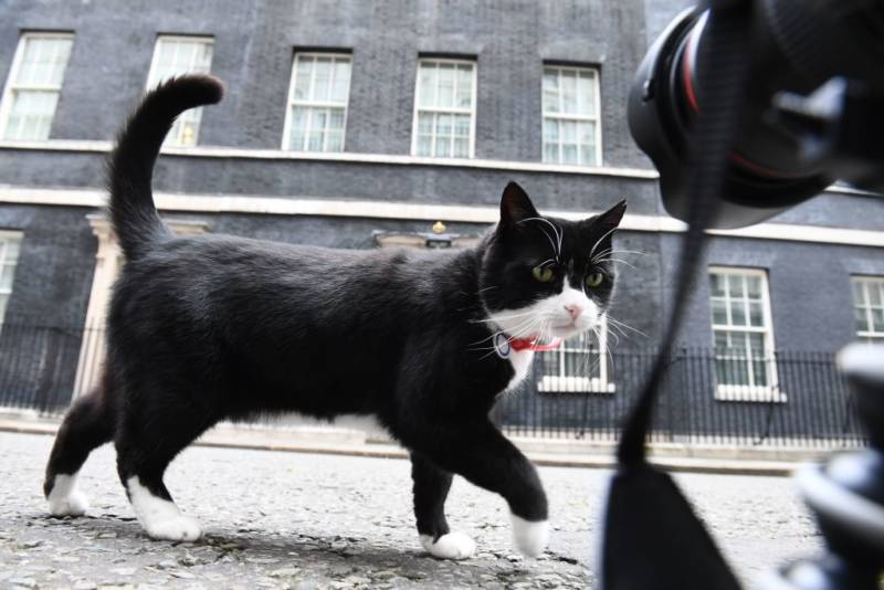 c4984d1b807 Palmerston, the Foreign & Commonwealth Office (FCO) cat investigates media  cameras at ground level in front of 10 Downing Street, London.