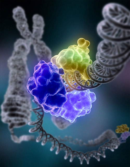 Aging happens because the body fails to repair DNA damage fast enough. (Wikimedia Commons)