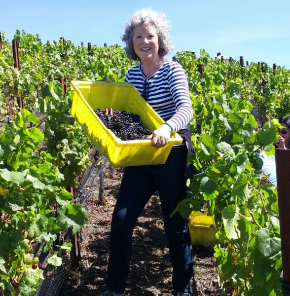 Elisabeth Handler sports her Fitbit Flex at this year's Pinot Noir harvest in the Santa Cruz mountains.