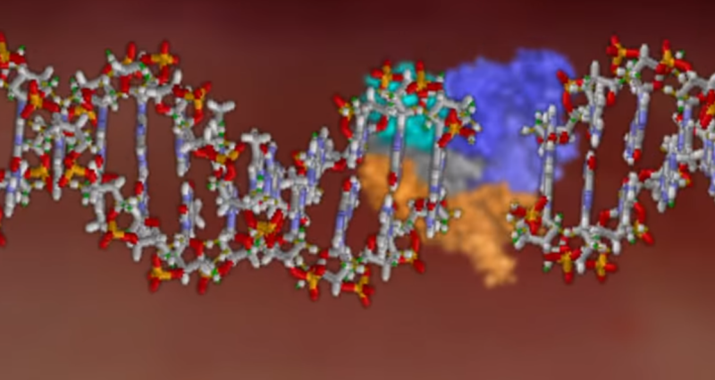 A graphic illustration of the enzyme Cas9, in the background, clipping a strand of DNA in order to remove a mutated sequence that could cause disease.
