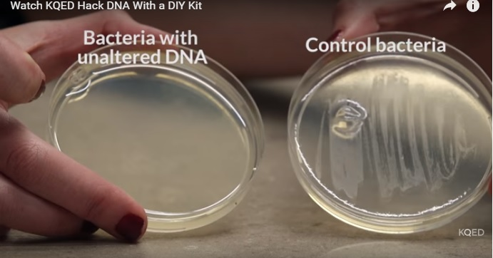 What Happened When Kqed Used A Crispr Kit To Hack Dna Future Of