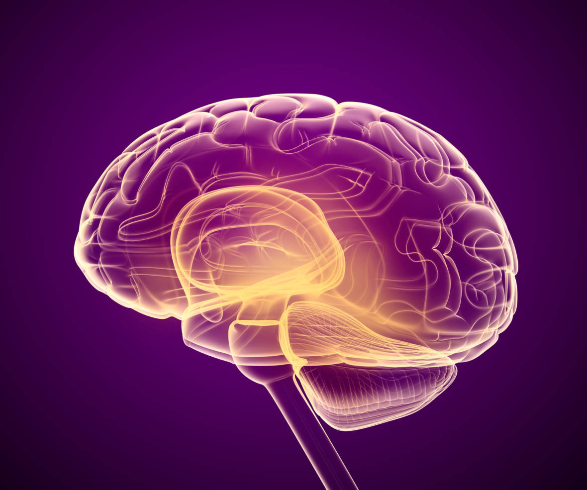 WATCH: How the Brain Transforms Vision Into Action