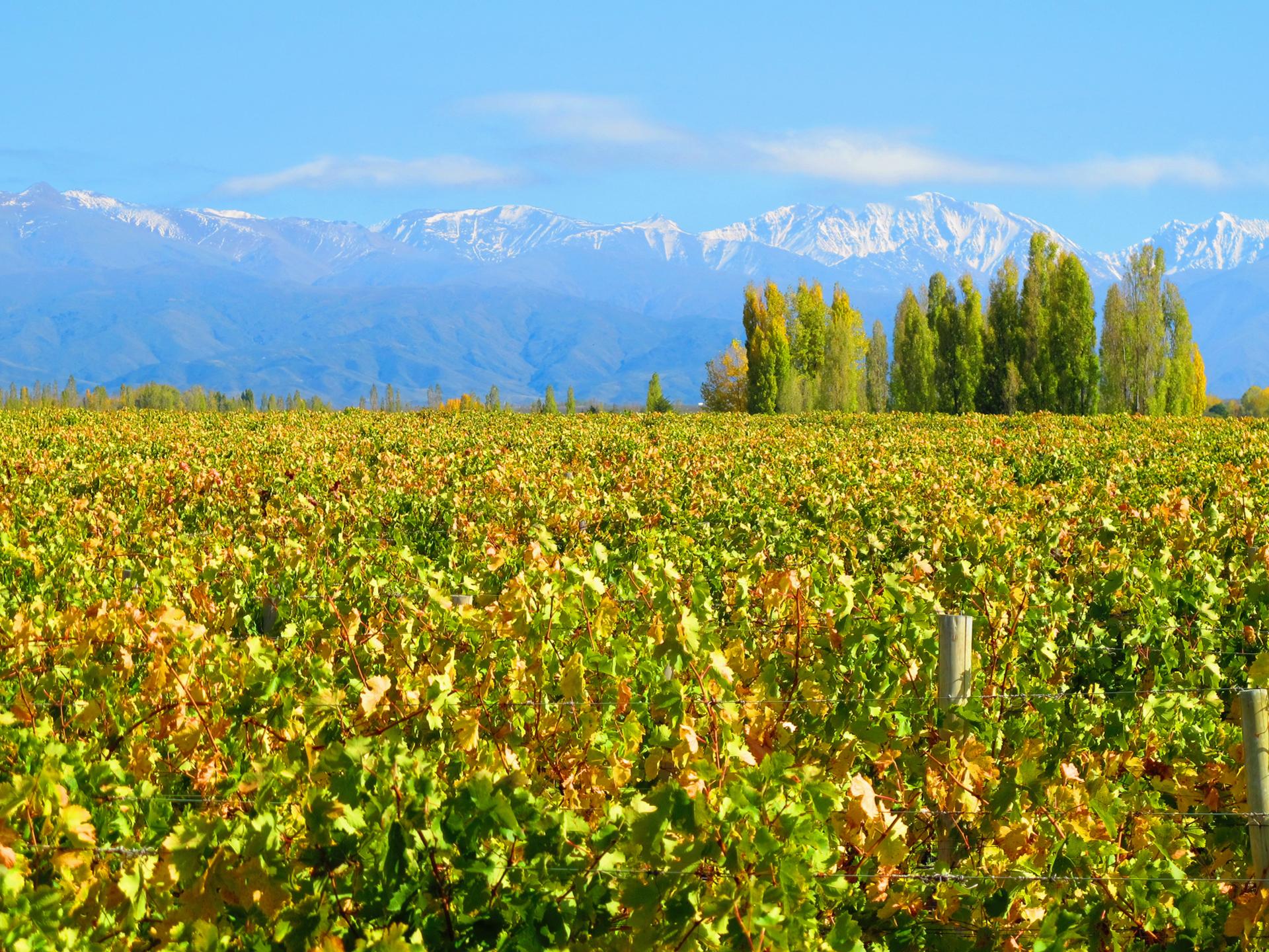 Luca Vineyard, Mendoza, Argentina.