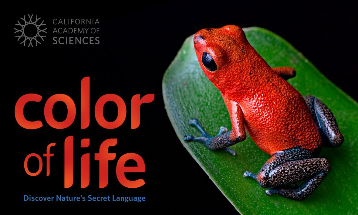 Win tickets to see 'Color of Life' at California Academy of ...