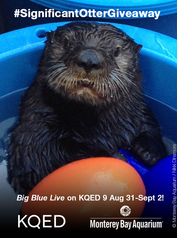 Repost this image to Twitter, Instagram or KQED's Facebook Page with your caption to be entered to win!