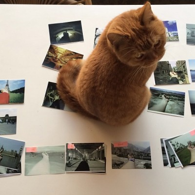 "One of Ai Weiwei's cats with photos from the artist's ""Study in Perspective"" series."