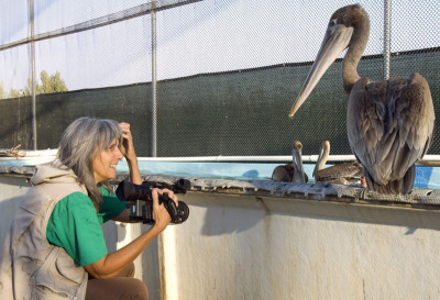 Filmmaker Judy Irving and a pelican named Gigi