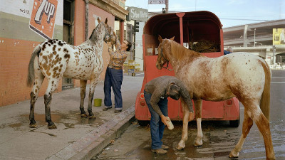 Skip Wheeler and His Wife Groom Their Horses after the Veterans Day Parade, Folsom at Second Street, 1980.