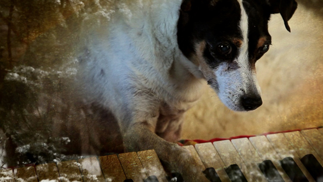 A scene from Laurie Anderson's 'Heart of a Dog,' playing at Doc Stories, Nov. 5-8 at the Vogue Theatre.