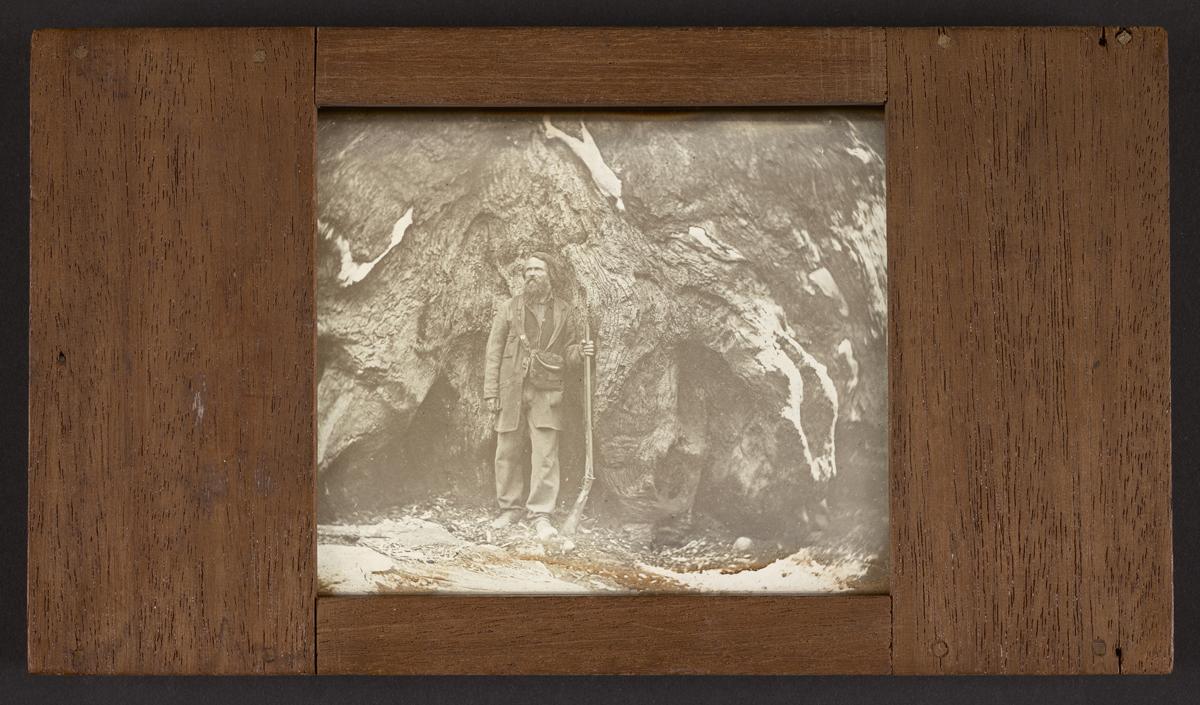 Carleton Watkins, 'Mariposa Grove. Galen Clark,' 1861.