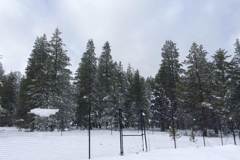 Under deep snow at UC Berkeley Sagehen Creek Field Station in the Eastern Sierra Nevada, groups of plant species hibernate as part of a 50-year-long environmental art project implemented by The Harrisons in collaboration with scientists and members of the Washoe Tribe.