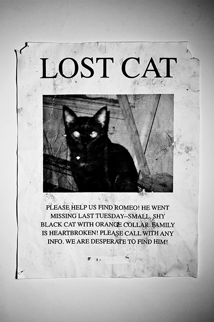 Anthony Discenza, 'Lost Cats--Black (Phil, Doug, Marie, Romeo, Spoon, Roy)