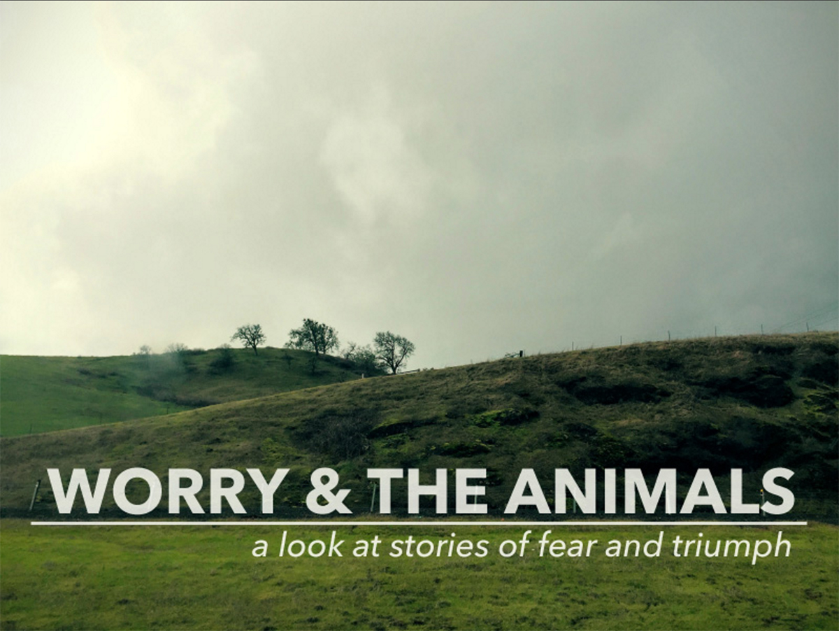 Amber Cady, 'Worry & The Animals.'