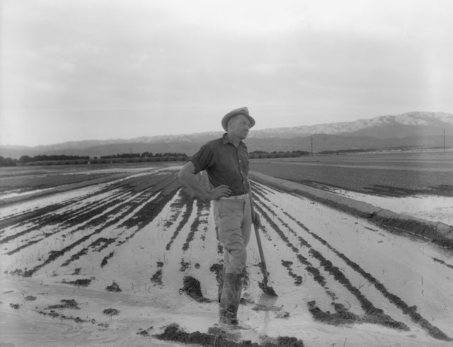 Dorothea Lange, 'Field Worker Irrigating Alfalfa and Barley Fields,' 1937.