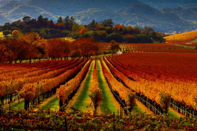 Regusci Winery, Napa Valley