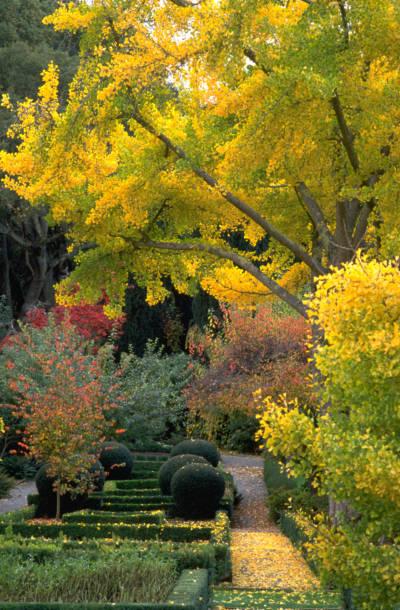 Filoli autumn color.