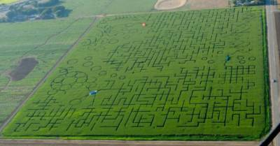 Cool Patch Pumpkins maze in Dixon