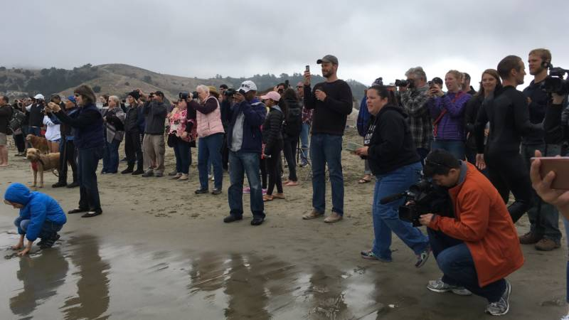 There was no shortage of people to check out - and photograph - the five dogs and their humans willing to brave the cold waters off Linda Mar Beach.