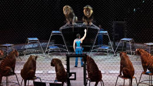 Alexander Lacey performs with big cats during a showing of the Ringling Brothers and Barnum & Bailey Circus at Eagle Bank Arena April 14, 2017 in Fairfax, Virginia.