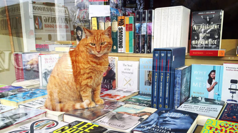Owen the cat at Aardvark Books