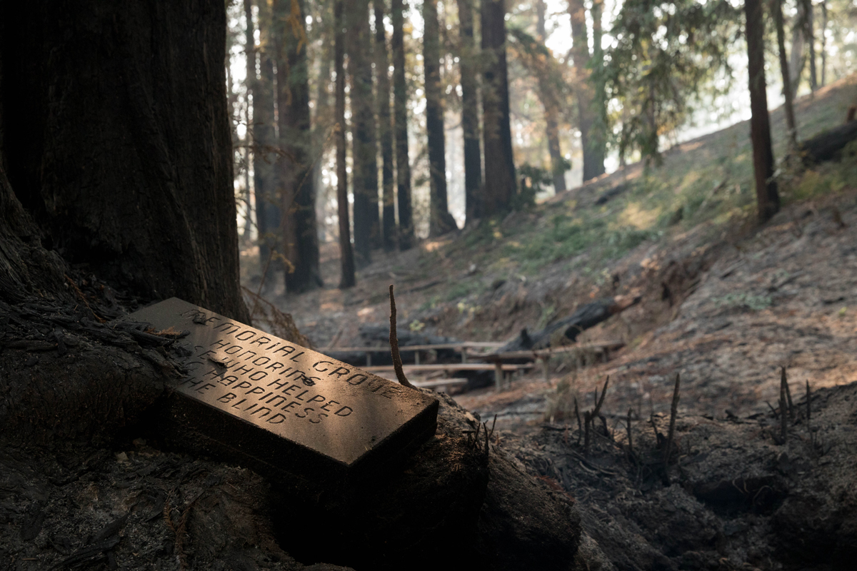 An old memorial sign in a charred tree.