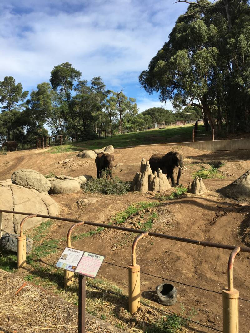 Elephants at the Oakland Zoo