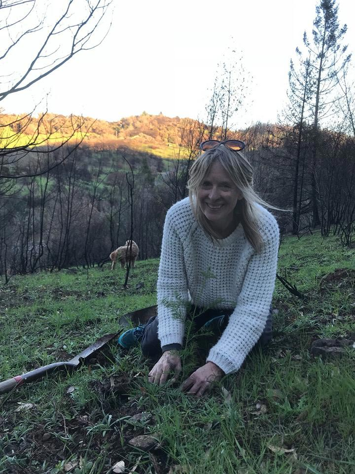 Robin Pressman planting redwood saplings at her property in the Santa Rosa foothills.