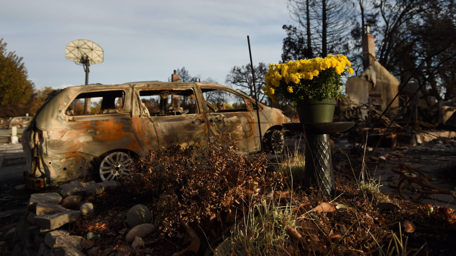 Fresh flowers are seen at a burned residence in the Coffey Park area of Santa Rosa, California on Oct. 20, 2017. JOSH EDELSON/AFP/Getty Images