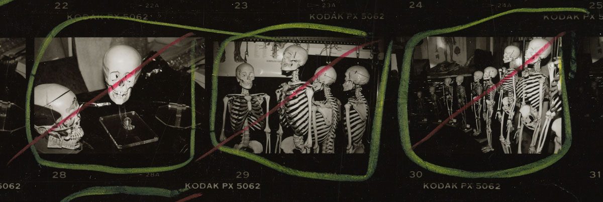 Andy Warhol, detail from 'Contact Sheet [Stuart Pivar with skulls and skeletons at anatomical model showroom (?)]', 1986.