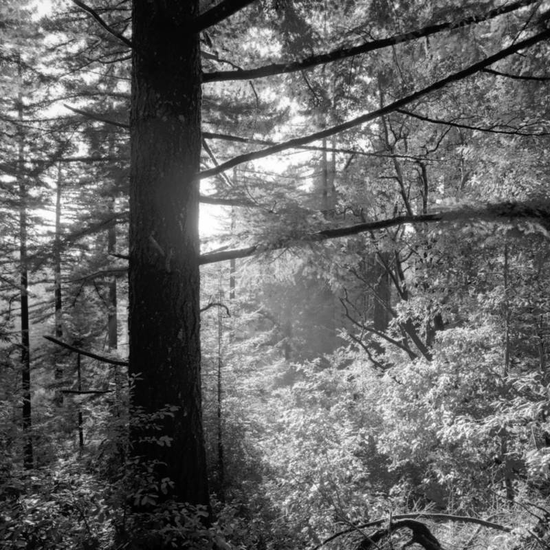 """Redwood Morning,"" by Robert Buelteman."