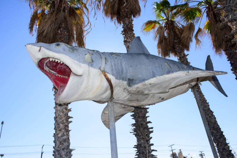 The Academy Museum has accepted into its collection the sole surviving full-scale model of the 1975 'Jaws' shark, donated by Nathan Adlen.