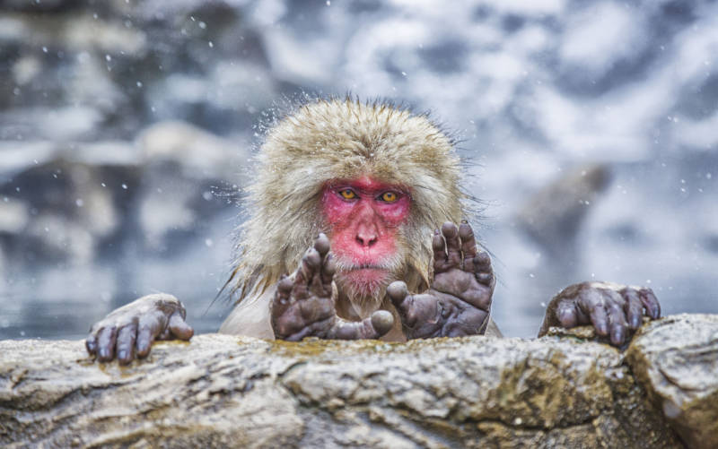 PHOTOS: Comedy Wildlife Finalists Offer Ode to Silly Serendipity