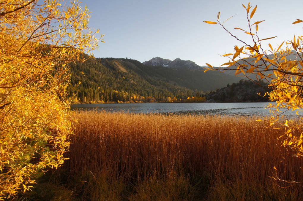 California Fall Foliage: It's Real, and There's a Map for That